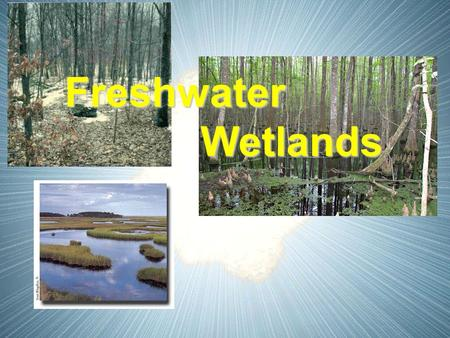 Freshwater Wetlands Wetlands. I. Wetlands A. Definition - an ecosystem in which water either covers the soil or is present at or near the surface of the.