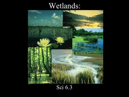 Wetlands: Sci 6.3. Land covered by water during some part of the year.