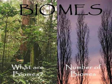 What are biomes? Small units of the biosphere Areas that have plants and animals that are well adapted to the region's physical environment Two distinction.