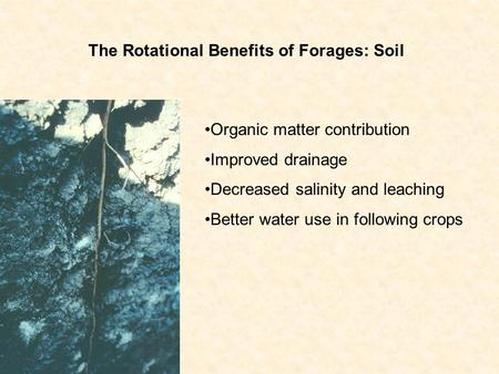Organic matter contribution Improved drainage Decreased salinity and leaching Better water use in following crops The Rotational Benefits of Forages: Soil.