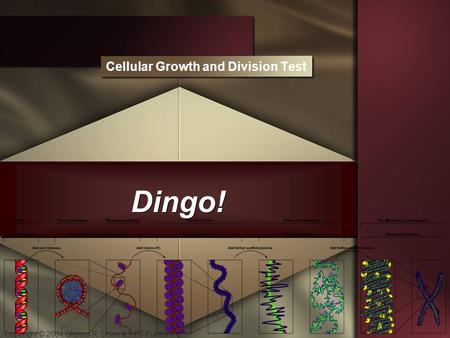 Copyright © 2004 Glenna R. Shaw & FTC Publishing Dingo! Cellular Growth and Division Test.