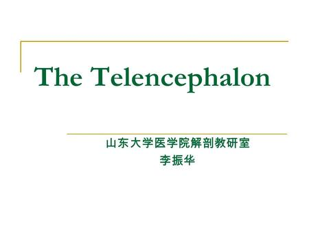 The Telencephalon 山东大学医学院解剖教研室 李振华. External feature The telencephalon consists of right and left cerebral hemisphere, partially separated by cerebral.