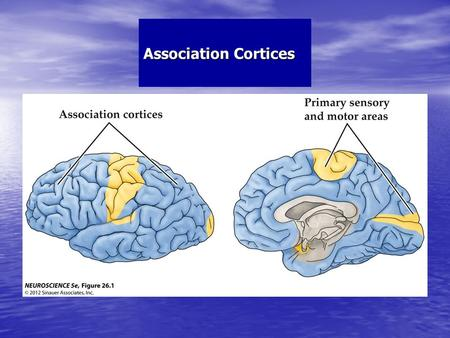 Association Cortices. Structure of the Human Neocortex Including Association Cortices.