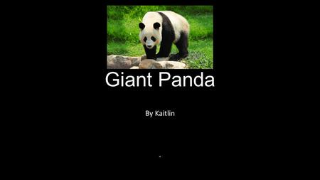 Giant Panda By Kaitlin in. How does a panda look? The Giant panda is a black and white bear. It has a body typical of bears. It has black fur on ears,