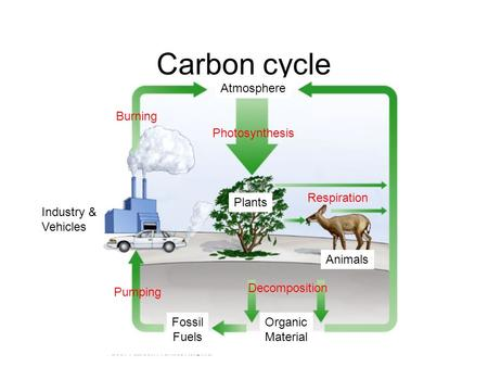 Carbon cycle Plants Animals Industry & Vehicles Organic Material Fossil Fuels Atmosphere Photosynthesis Respiration Decomposition Burning Pumping.