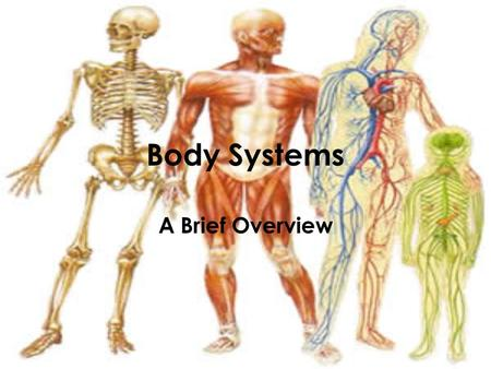 Body Systems A Brief Overview. Levels of Organization in Living Things Cell –Red blood cell –Epithelial cell –Neuron Tissue –Epithelial tissue –Connective.