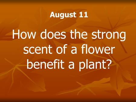 August 11 How does the strong scent of a flower benefit a plant?
