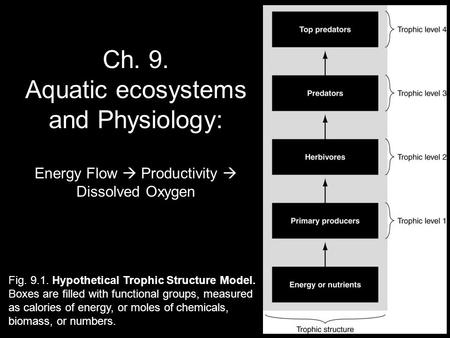 Ch. 9. Aquatic ecosystems and Physiology: Energy Flow  Productivity  Dissolved Oxygen Fig. 9.1. Hypothetical Trophic Structure Model. Boxes are filled.