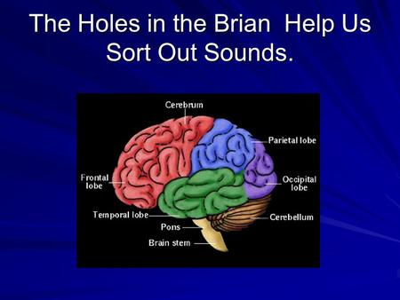 The Holes in the Brian Help Us Sort Out Sounds..  I. The Brain's ability to sort out sounds  1. speech sounds are categorized.  2.Misinterpretations.