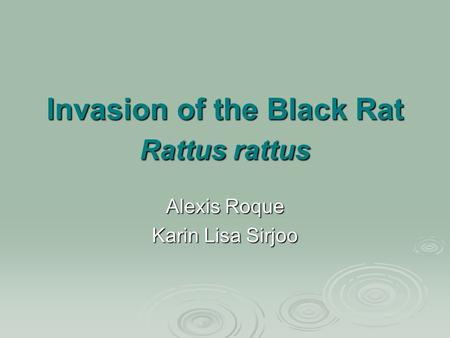 Invasion of the Black Rat Rattus rattus Alexis Roque Karin Lisa Sirjoo.