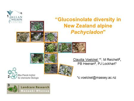 """Glucosinolate diversity in New Zealand alpine Pachycladon October 07 Claudia Voelckel * 1, M Reichelt 2, PB Heenan 3, PJ Lockhart 1"