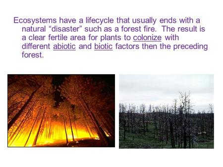 "Ecosystems have a lifecycle that usually ends with a natural ""disaster"" such as a forest fire. The result is a clear fertile area for plants to colonize."