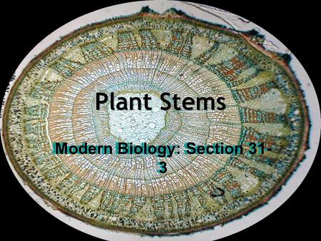 Modern Biology: Section 31-3