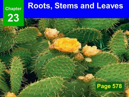 Chapter23 Roots, Stems and Leaves Photo Credit: Getty Images Page 578.