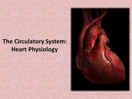 The Circulatory System: Heart Physiology
