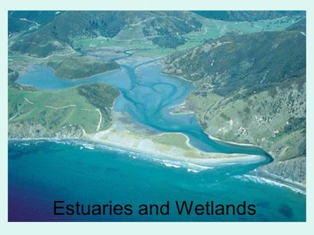 Estuaries and Wetlands
