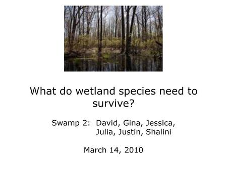 What do wetland species need to survive? Swamp 2: David, Gina, Jessica, Julia, Justin, Shalini March 14, 2010.
