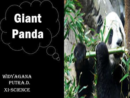 Widyagana Putra.D. XI-Science Giant Panda. The Giant Panda is an endangered species and highly threatened. 27 Country 1000 In the wild ( Ailuropoda melanoleuca,