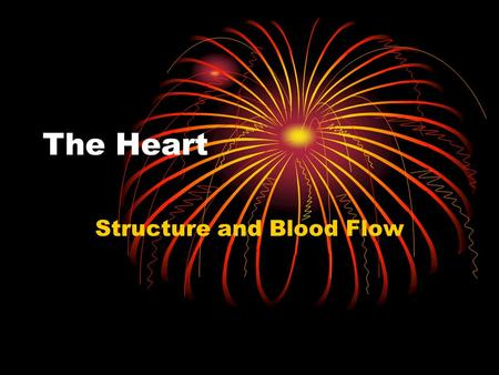 Structure and Blood Flow