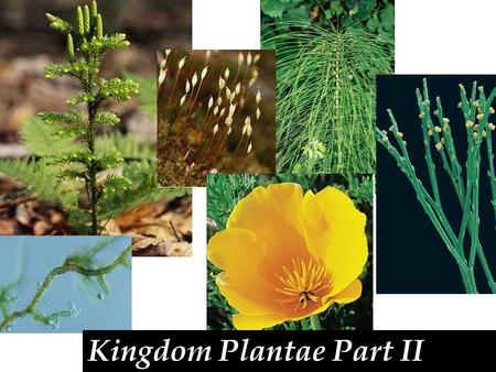 Kingdom Plantae Part II. Seed plants-produce seeds in the sporophyte generation. A seed consist of a seed coat, food, and sporophyte embryo. Also spores.