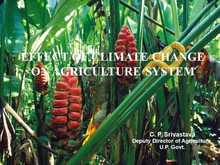 1 EFFECT OF CLIMATE CHANGE ON AGRICULTURE SYSTEM C. P. Srivastava Deputy Director of Agriculture, U.P. Govt.