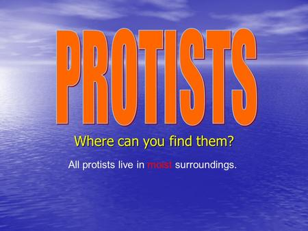 Where can you find them? All protists live in moist surroundings.