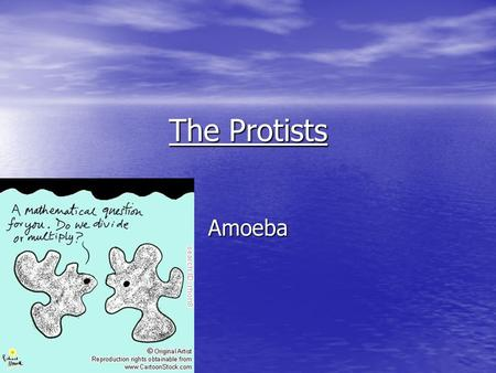The Protists Amoeba.