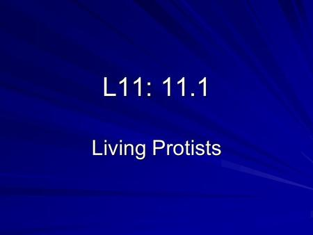 L11: 11.1 Living Protists. QUESTION: Which of the four protists (amoeba, paramecium, Volvox, & Euglena) have animal-like features, and which ones have.