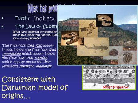 Fossils The Law of Superposition Consistent with Darwinian model of origins… Most Primitive Most Complex What early scientist is responsible for these.