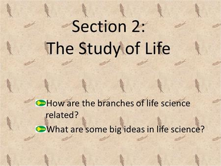Section 2: The Study of Life How are the branches of life science related? What are some big ideas in life science?