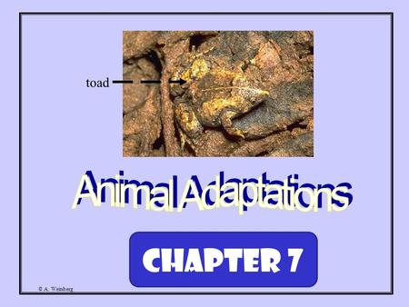 © A. Weinberg toad Chapter 7. © A. Weinberg Course of Study: Describe behaviors and body structures that help animals survive in particular habitats.