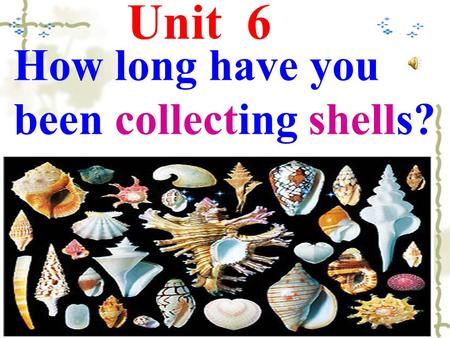 Unit 6 How long have you been collecting shells?.