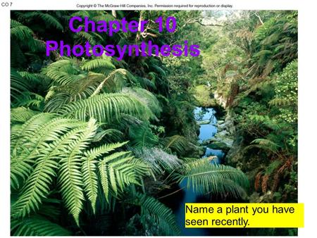 CO 7 Chapter 10 Photosynthesis Name a plant you have seen recently.