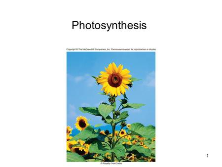 Photosynthesis 1. 2 Photosynthesis Overview Energy for all life on Earth ultimately comes from photosynthesis 6CO 2 + 12H 2 O C 6 H 12 O 6 + 6H 2 O +