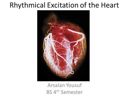 Rhythmical Excitation of the Heart
