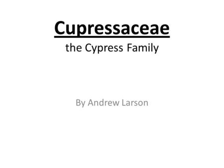 Cupressaceae the Cypress Family By Andrew Larson.