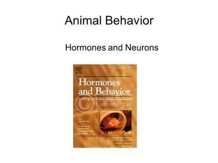 Animal Behavior Hormones and Neurons. What are hormones? In animals... Molecules that circulate in blood Bind to receptors Cause something to happen i.e.,