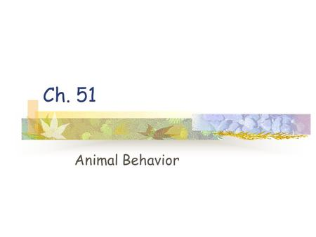 Ch. 51 Animal Behavior. Behavior Behavior is what an animal does and how it does it It Includes muscular and non-muscular activity.