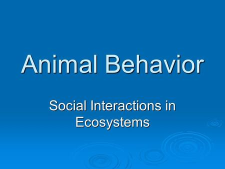 Animal Behavior Social Interactions in Ecosystems.