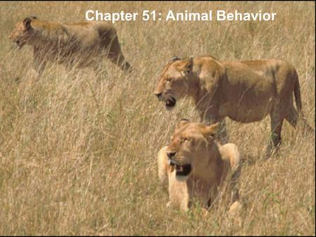 Copyright © 2005 Pearson Education, Inc. publishing as Benjamin Cummings Chapter 51: Animal Behavior.