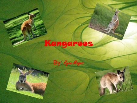Kangaroos By: Ryan Moger. Physical traits They have sensitive ears to hear predators coming. They have a long tail to use as a fifth leg. They have big.