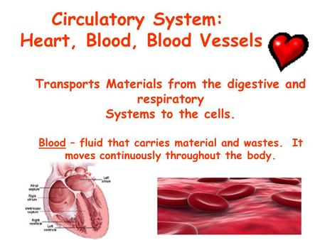 Circulatory System: Heart, Blood, Blood Vessels Transports Materials from the digestive and respiratory Systems to the cells. Blood – fluid that carries.