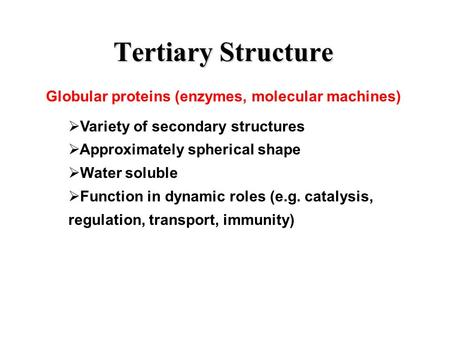 Tertiary Structure Globular proteins (enzymes, molecular machines)  Variety of secondary structures  Approximately spherical shape  Water soluble 