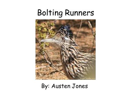 Bolting Runners By: Austen Jones. Table of Contents Introduction…………..1 diet…………………………...2 habitat……………………..3 protection………………..4 Look like……………………5 growing……………………..6.