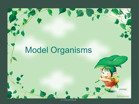 Model Organisms. Model Organism  Important features of all model organisms  Short lifespan  Small, easy and inexpensive to maintain  Produce large.