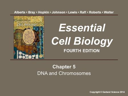 Chapter 5 DNA and Chromosomes Essential Cell Biology FOURTH EDITION Copyright © Garland Science 2014 Alberts Bray Hopkin Johnson Lewis Raff Roberts Walter.