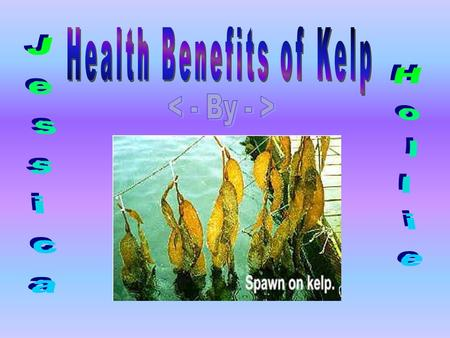 Kelp is an excellent source of minerals from the sea, particularly iodine which is very important for the thyroid gland to function properly. The thyroid.