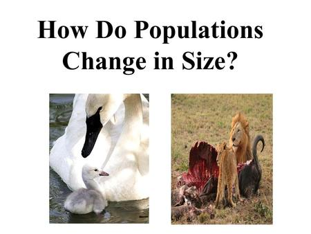 How Do Populations Change in Size?. Populations A population is all the members of a species living in the same place at the same time. A population is.