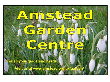 For all your gardening needs Visit us at www.amstead.org.uk/garden/