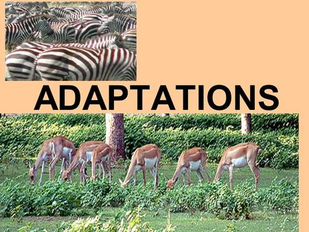ADAPTATIONS. ADAPTATION A CHARACTERISTIC THAT HELPS AN ORGANISM SURVIVE AND REPRODUCE IN ITS ENVIRONMENT.